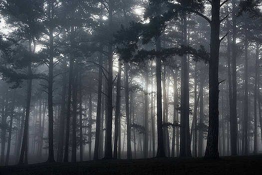 Pine Forest Fog by Bud Simpson
