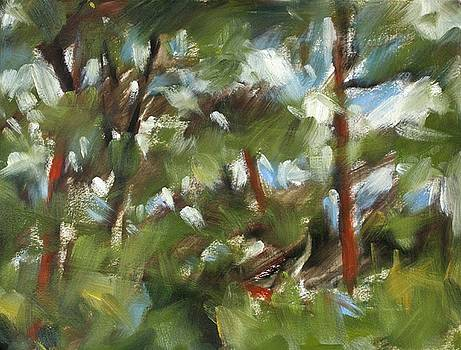 Pine Forest by Owen Hunt