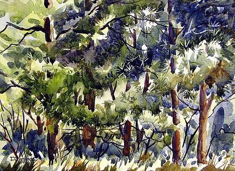 Pine Grove by Chito Gonzaga