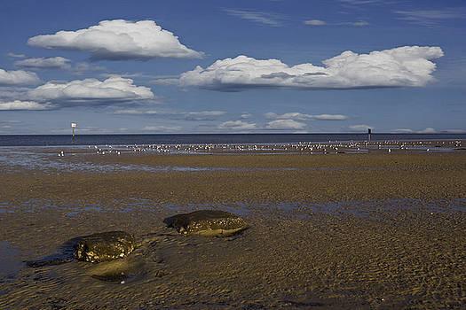 Regina Williams - Pine Island Beach