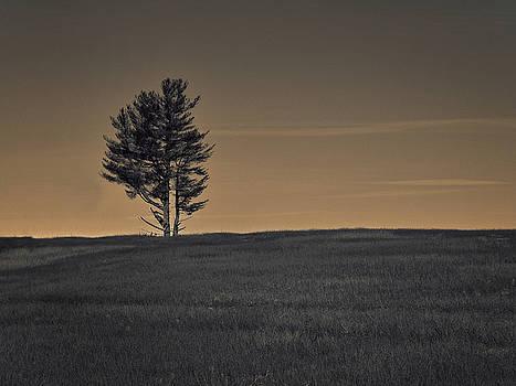 Pine by Mim White