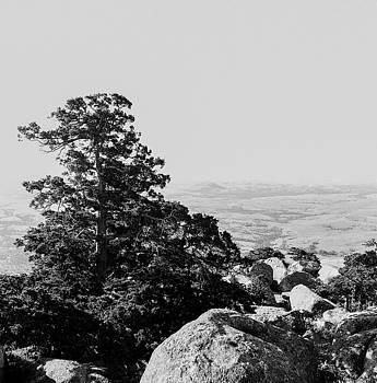 Pine on Mount Scott by Nathan Hillis