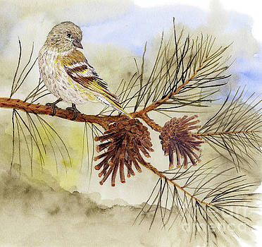 Pine Siskin among the Pinecones by Thom Glace