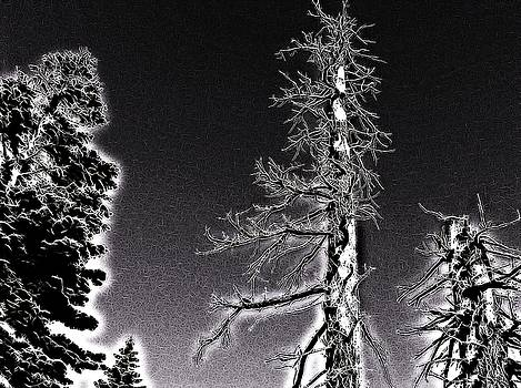 Pine Tree Abstract by Mark J Dunn