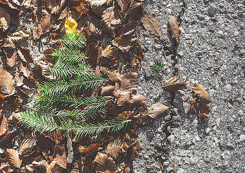 Pine tree and autumn leaves by Deyan Georgiev