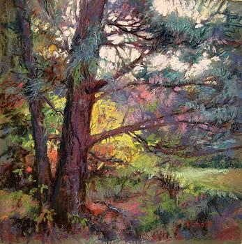 Pine Tree Dance by Donna Shortt