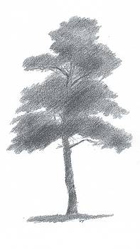 Pine Tree Drawing Number One by Alan Daysh