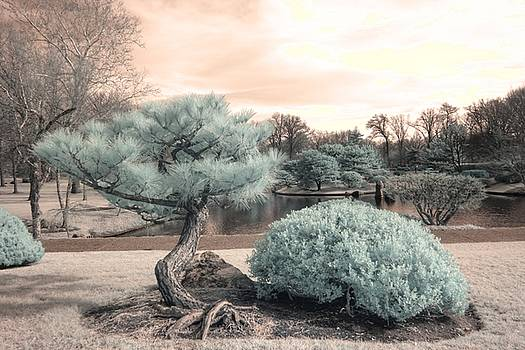 Pine Tree Infrared Missouri Botanical Garden  by Jane Linders