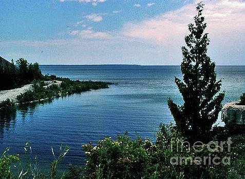 Gary Wonning - Pine Tree on Lake Huron