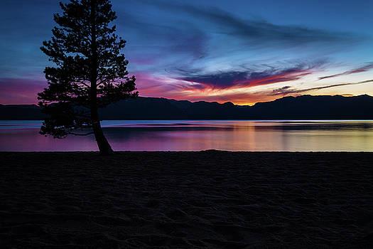 Rick Strobaugh - Pine Tree on the Lake