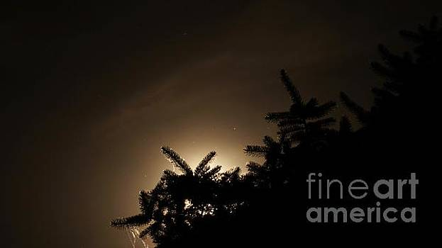 Pine Tree Silhouette by Nightmare's Eye Photography