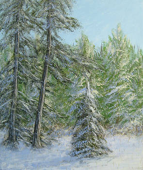 Pine Trees in the Snow by Matthew Hannum