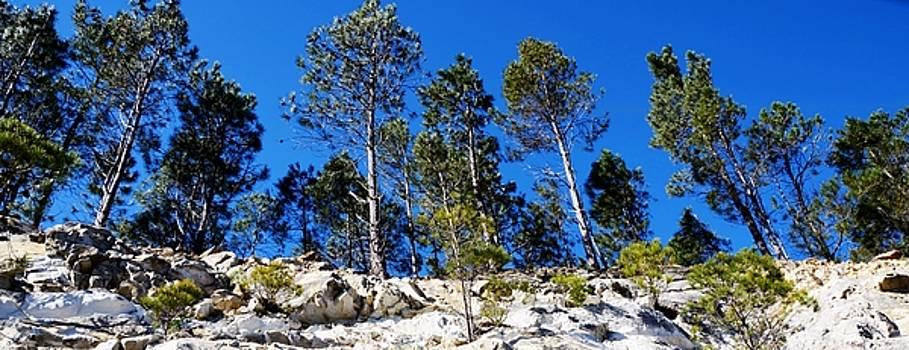 Pine Trees on rocks by Werner Lehmann