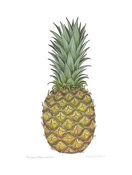 Pineapple II by Elizabeth H Tudor