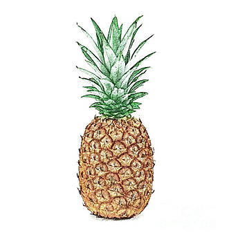 Pineapple Pencil by Jennifer Capo