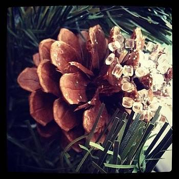 Pinecone.  #like #follow #followme by Shyann Lyssyj