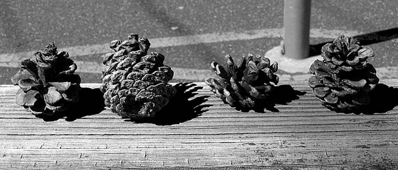 Pinecones by Grant Marchand