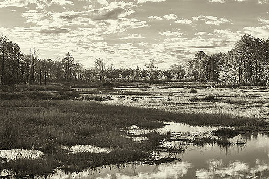 Pinelands in Black and White by Jim Cook