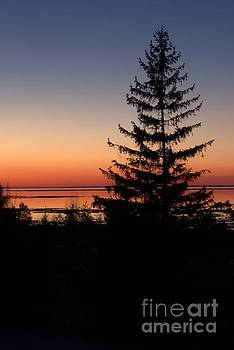 Pines Icy Bliss 2 by John Scatcherd