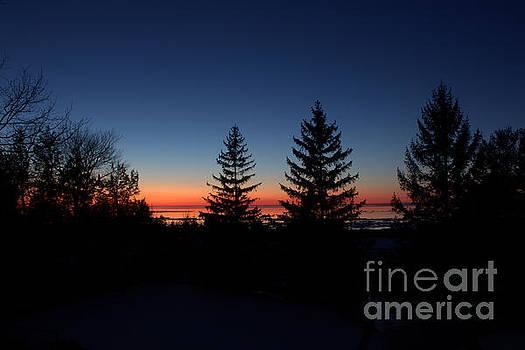 Pines Icy Bliss 3 by John Scatcherd