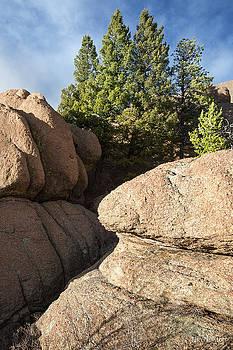 Pines in Granite by Tim Newton
