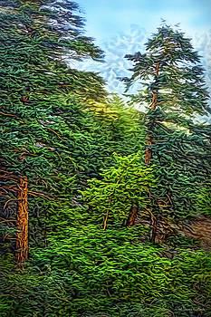 Pines In Morning Light by Joel Bruce Wallach