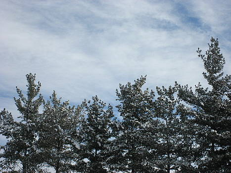 Pines in the Winter Sky by Sheryl Burns
