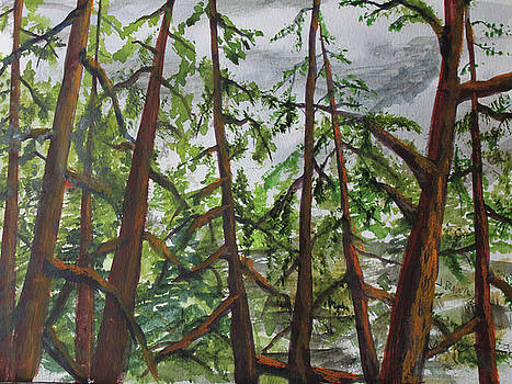 Pines by Jack G Brauer