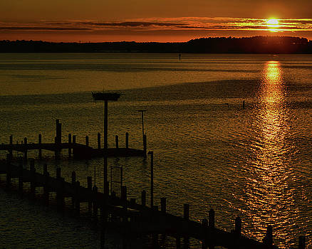Piney Point Too by Robert McCubbin