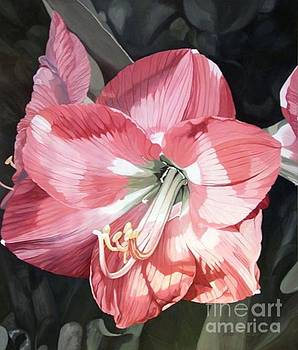 Pink Amaryllis by Laurie Rohner