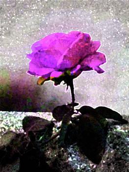 Pink and Black Rose by Natalya Shvetsky