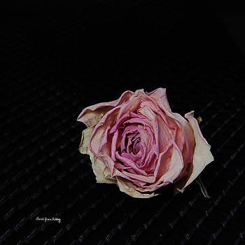 Pink and Pale by Randi Grace Nilsberg