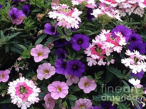 Pink and Purple by Glenda Zuckerman