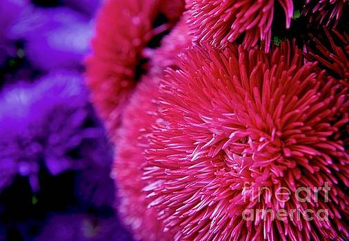 Pink and Purple by Glennis Siverson