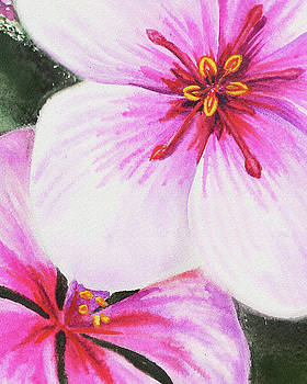 Pink And Purple Watercolor Flowers Close Up by Irina Sztukowski