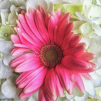 Pink and White Bouquet by Andrew Soundarajan