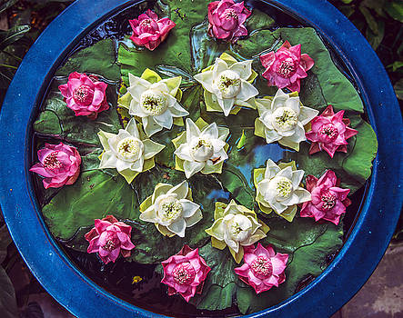 Eduardo Huelin - Pink and white lotus flowers
