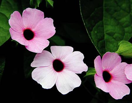 Allen Nice-Webb - Pink and White Mandevilla