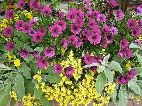 Pink and Yellow Flowers by Glenda Zuckerman