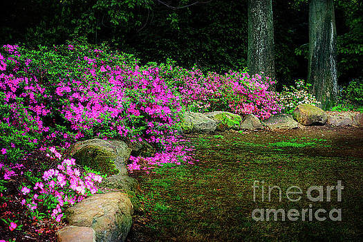 Pink Azaleas at the Azalea Festival by Tamyra Ayles