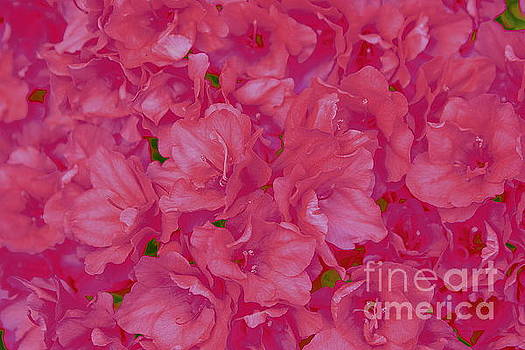 Pink Azaleas Pop Art by Dora Sofia Caputo Photographic Art and Design