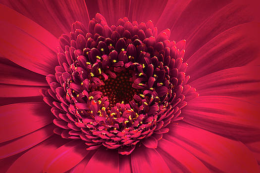 Pink Beauty by Nick Bywater