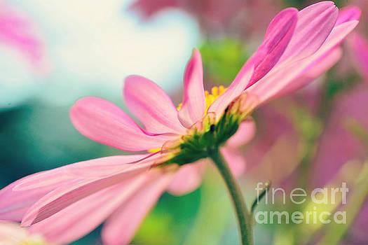 Pink Bliss by Kelly Nowak