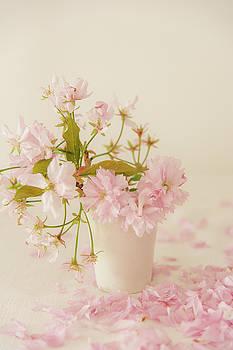 Pink Blossom by David Ridley