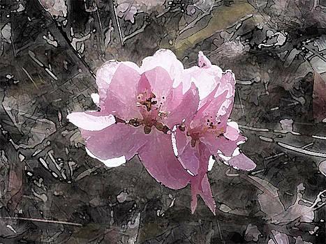 Pink Blossoms  by Megan Nicole McKinney