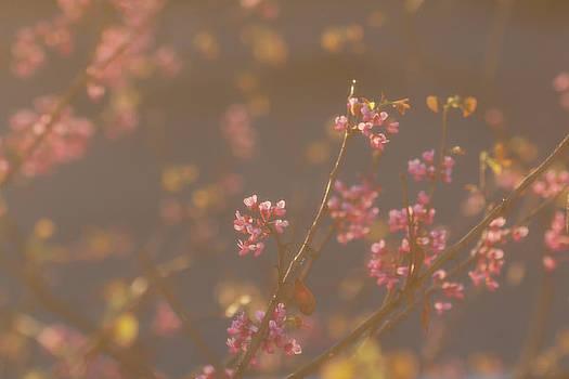 Pink Blossoms by Susan Schmidt