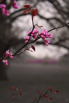 Pink Buds by Barbara Dean