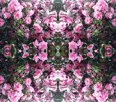 Pink Bush Flower Mandala 2 by Julia Woodman