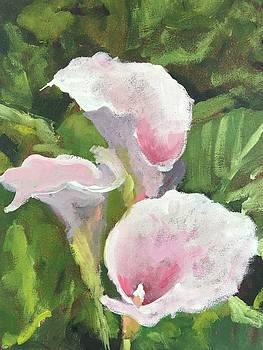 Pink Calla Lilies by Susan E Jones