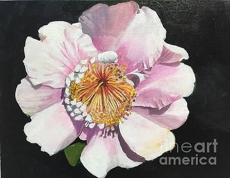 Pink Camilla by Elaine Callahan